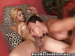 Fucking Blonde Tranny on Leopard Couch tubes